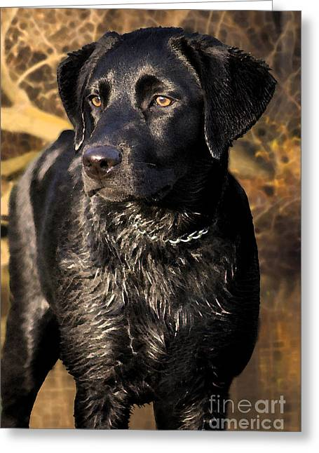 Black Labrador Retriever Dog Greeting Card by Cathy  Beharriell