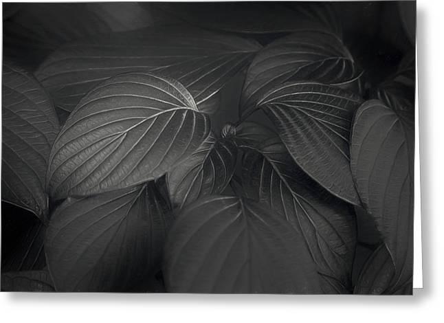 Black Leaves Greeting Card