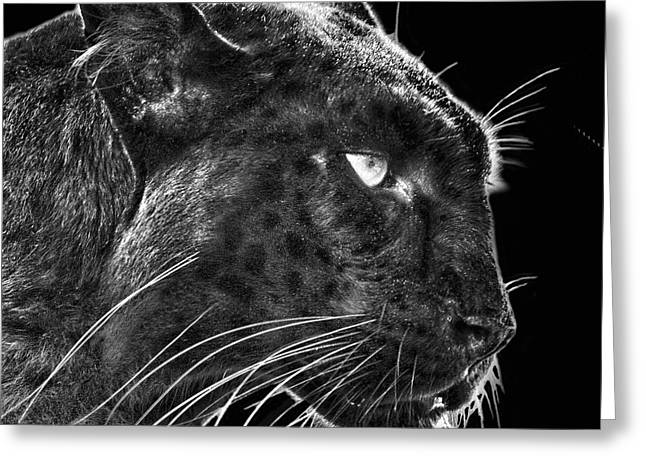 Black Leopard 2 Greeting Card by Larry Linton