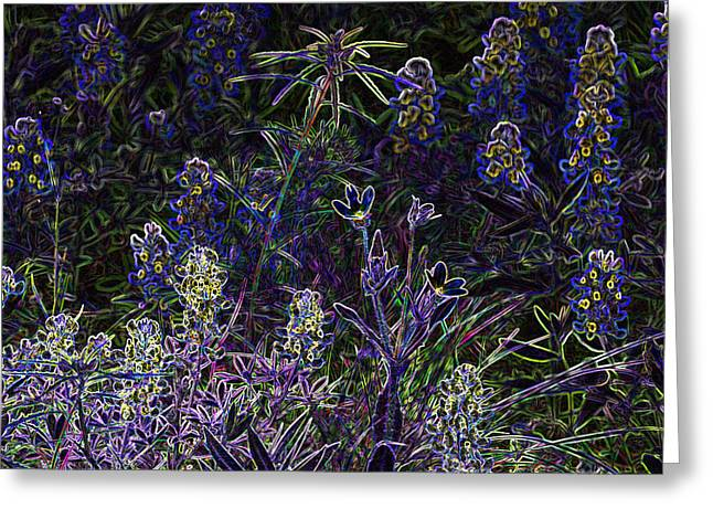 Black Light Wildflowers Greeting Card by Linda Phelps