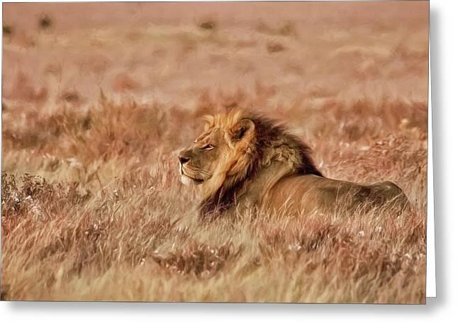 Black-maned Lion Of The Kalahari Waiting Greeting Card