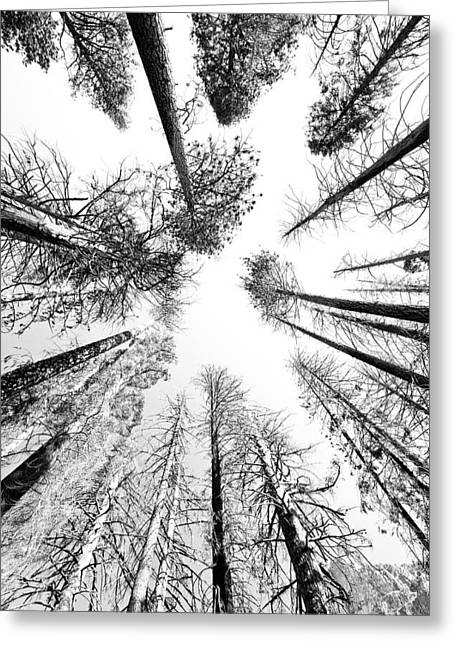 Black N White Sky-trees Greeting Card by Rick Pham
