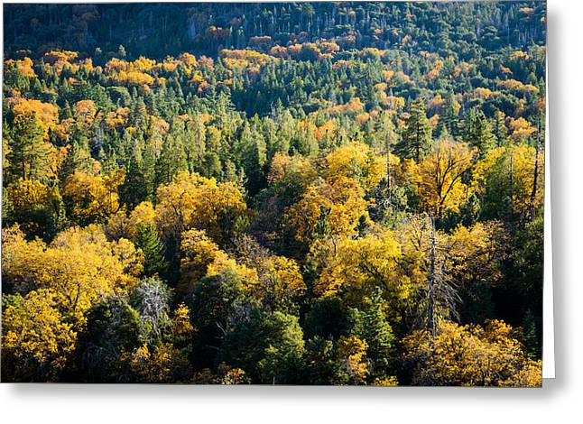 Black Oaks Turning Greeting Card by Alexander Kunz