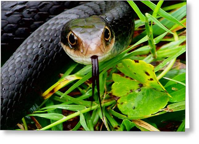 Wild Racers Greeting Cards - Black Racer Greeting Card by Angel H Juarbe