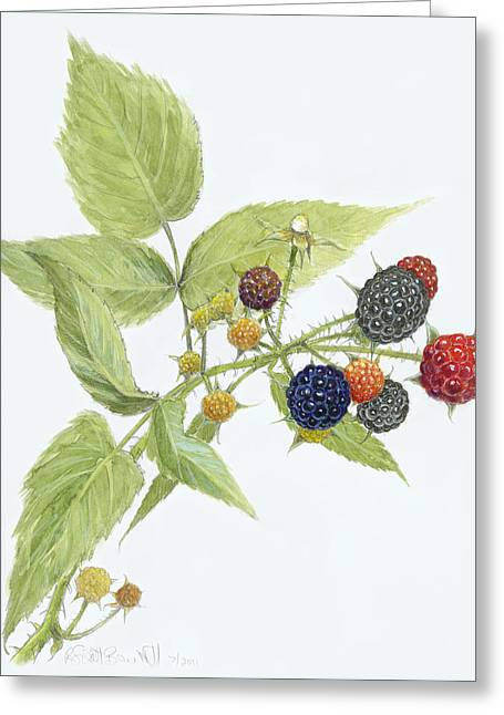 Black Raspberries Greeting Card by Scott Bennett