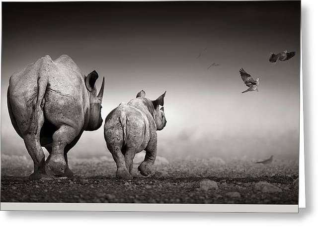 Black Rhino Cow With Calf  Greeting Card