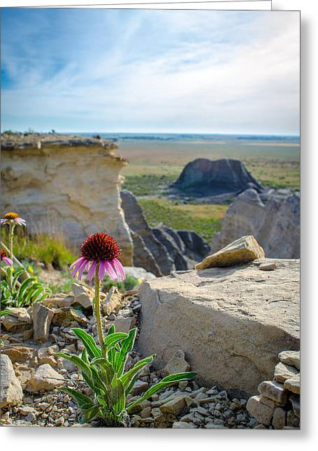 Black Sampson In The Badlands Greeting Card