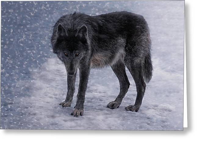 Black She-wolf Greeting Card