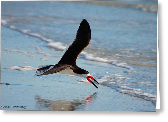 Black Skimmer Greeting Card by Barbara Bowen