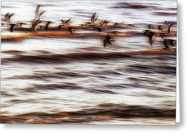 Greeting Card featuring the photograph Black Skimmers Of Long Beach - Mississippi - Birds by Jason Politte