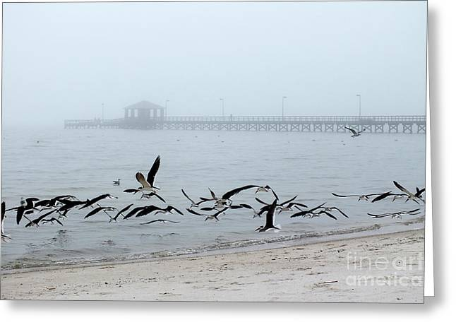 Black Skimmers - Biloxi Mississippi Greeting Card