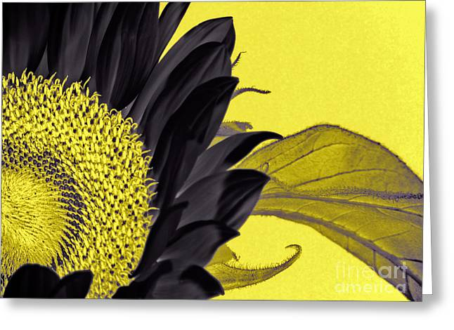 Black Sunflower Greeting Card by Karen Lewis
