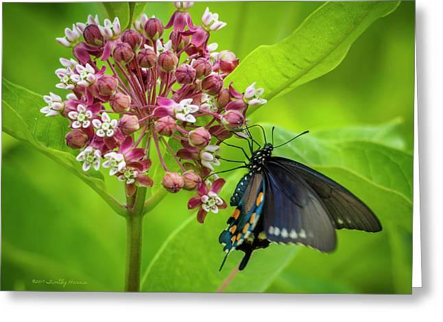 Black Swallowtail 54 Greeting Card