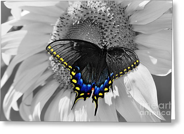 Black Swallowtail And Sunflower Color Splash Greeting Card