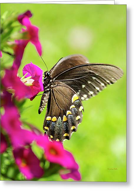 Greeting Card featuring the photograph Black Swallowtail Butterfly by Christina Rollo