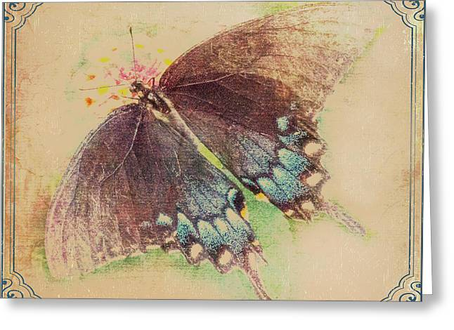 Black Swallowtail Butterfly Framed  Greeting Card