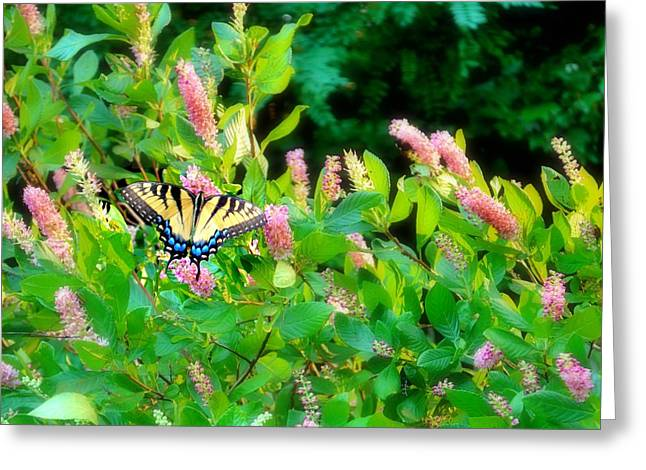 Greeting Card featuring the photograph Black Swallowtail by EDi by Darlene