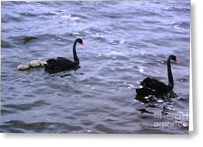 Black Swan Family Greeting Card