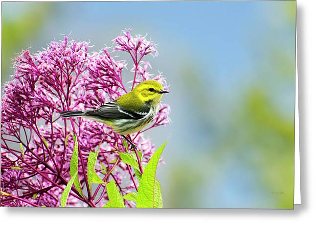 Black Throated Green Warbler Greeting Card