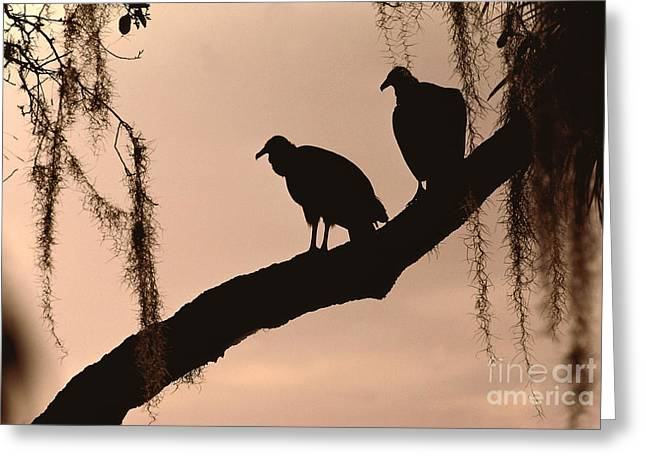 Black Vultures Greeting Card by Lynda Richardson
