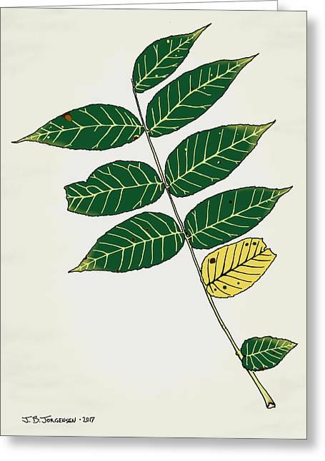 Black Walnut Leaf Illustration Greeting Card by Jamie Jorgensen