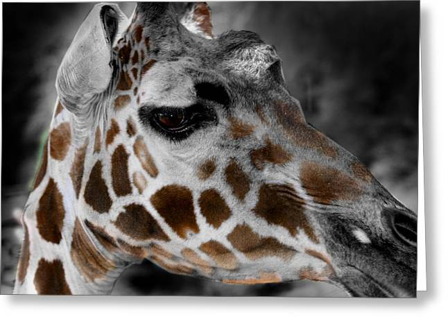 Black  White And Color Giraffe Greeting Card by Anthony Jones