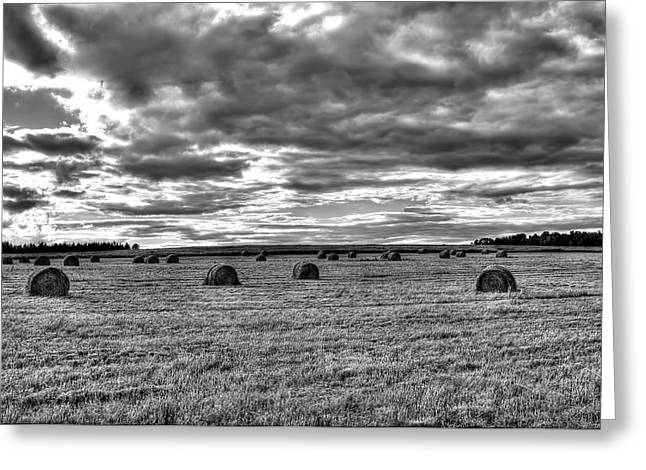 Greeting Card featuring the photograph Black-white Hay Day by Gary Smith
