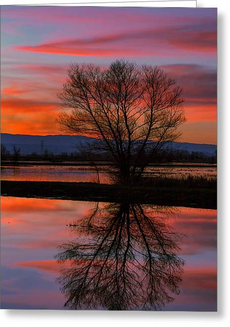 Black Willow Sunset Greeting Card