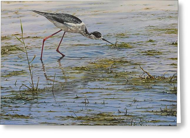 Greeting Card featuring the painting Black Winged Stilt by Alan M Hunt