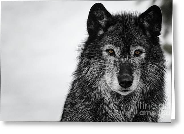 Black Wolf I Greeting Card by Brad Allen Fine Art