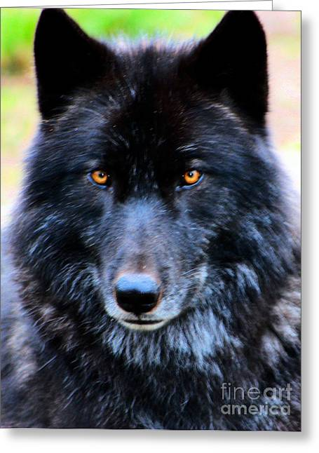 Black Wolf Greeting Card by Nick Gustafson