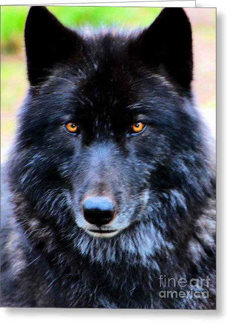 Black Wolf Greeting Card