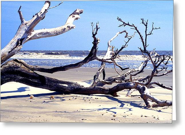 Kayaking Greeting Cards - Blackbeard Island Beach Greeting Card by Thomas R Fletcher