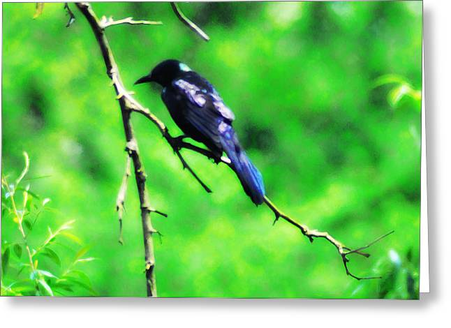 Blackbird Greeting Card by Bill Cannon