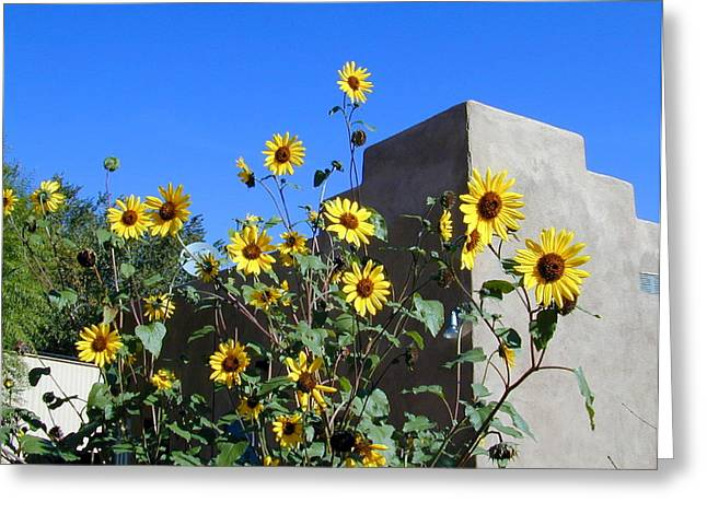Blackeyed Susans And Adobe Greeting Card by Joseph R Luciano