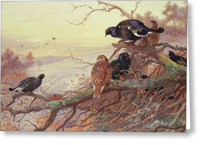 Blackgame In Winter  Greeting Card by Archibald Thorburn