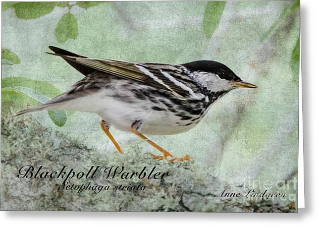 Blackpoll Warbler Bird Greeting Card