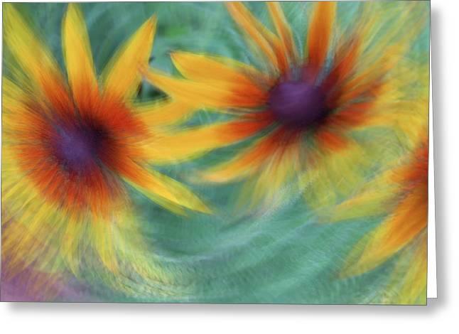 Greeting Card featuring the photograph Blanket Flower Bingo by Deborah Hughes