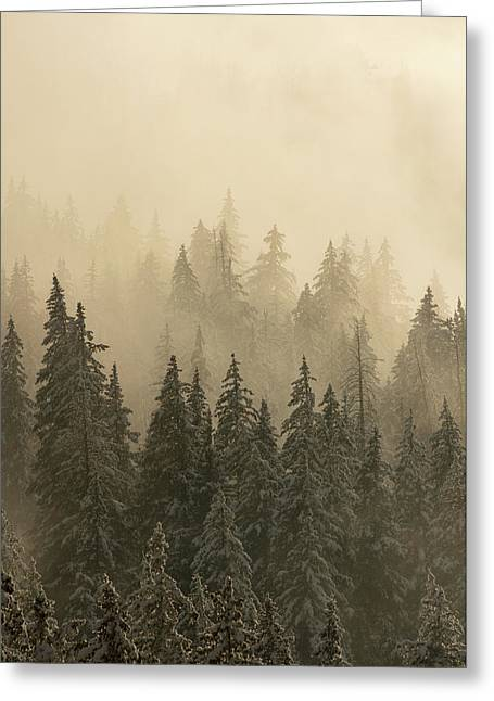 Greeting Card featuring the photograph Blanket Of Back-lit Fog by Dustin LeFevre