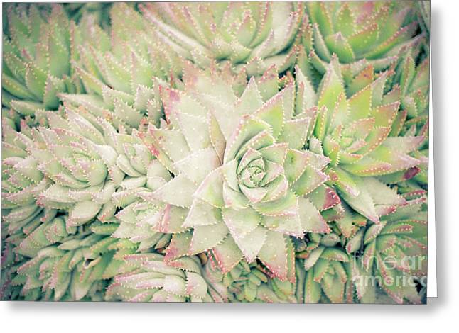 Blanket Of Succulents Greeting Card