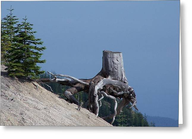 Blasted Stump  Greeting Card by Gene Ritchhart