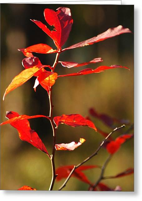 Blazing Fire Greeting Card by Lori Mellen-Pagliaro