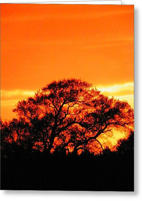 Blazing Oak Tree Greeting Card by Karen Wiles