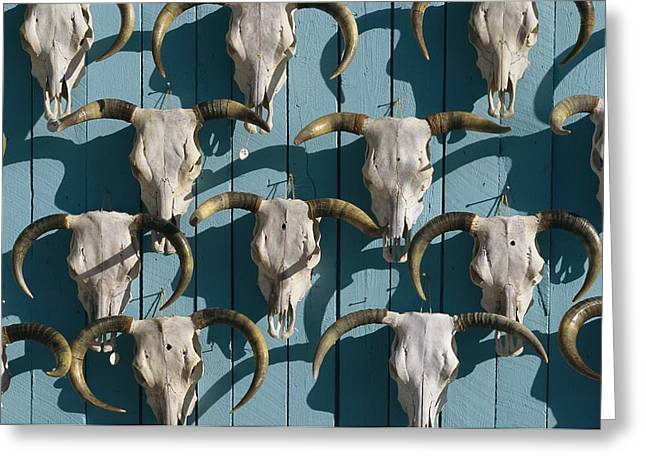 Bleached Cow Skulls Decorate A Wall Greeting Card