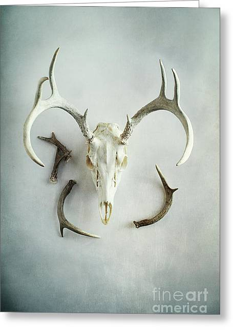Greeting Card featuring the photograph Bleached Stag Skull by Stephanie Frey