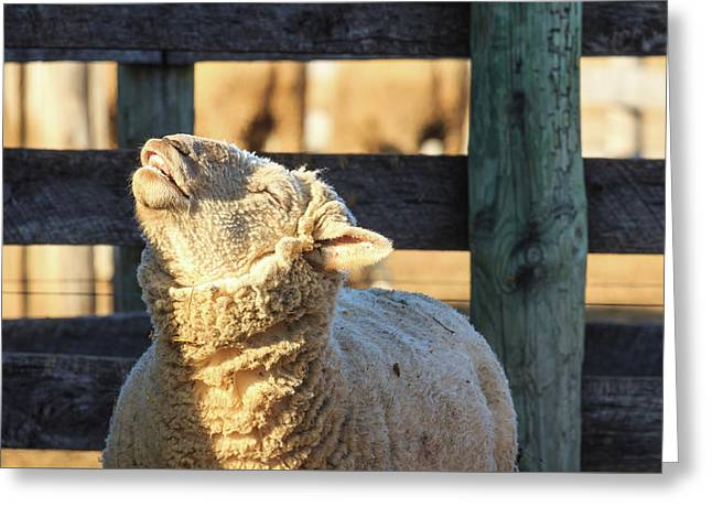 Bleating Sheep Greeting Card