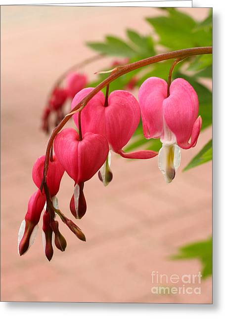 Bleeding Hearts In The Park Greeting Card