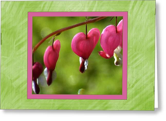 Bleeding Hearts Greeting Card by Lori Seaman