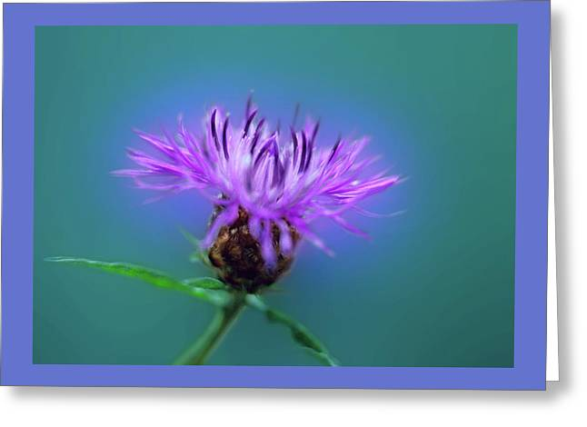 Cornflower. Greeting Card
