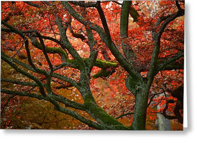 Blood Red Autumn Tree Greeting Card by Sandra Rugina
